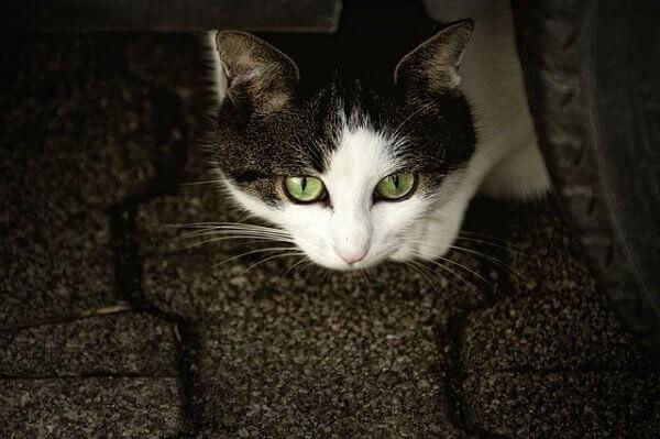 猫が爪とぎをする理由