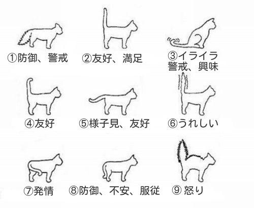 猫語マスターを目指す者はまず、「しっぽが表す猫の気持ちを学ぶことが大切」なのです!(笑) 以下の画像を見ることで、しっぽが表す猫の気持ちが理解できます。