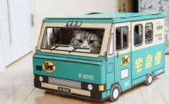 猫を迎える準備